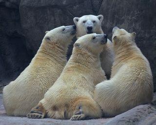 296_bears