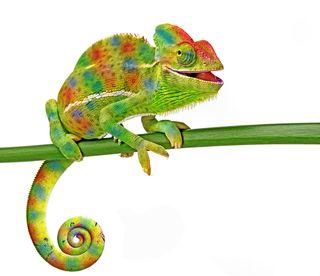 343 - chameleon